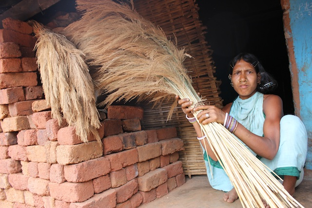 Tribal women collect fistfuls of 'broom grass' from the hill slopes of the Niyamgiri range in Odisha, India. Bundles tied together with hemp rope sell for 60 cents apiece in village markets, though urban traders get double the price. Credit: Manipadma Jena/IPS