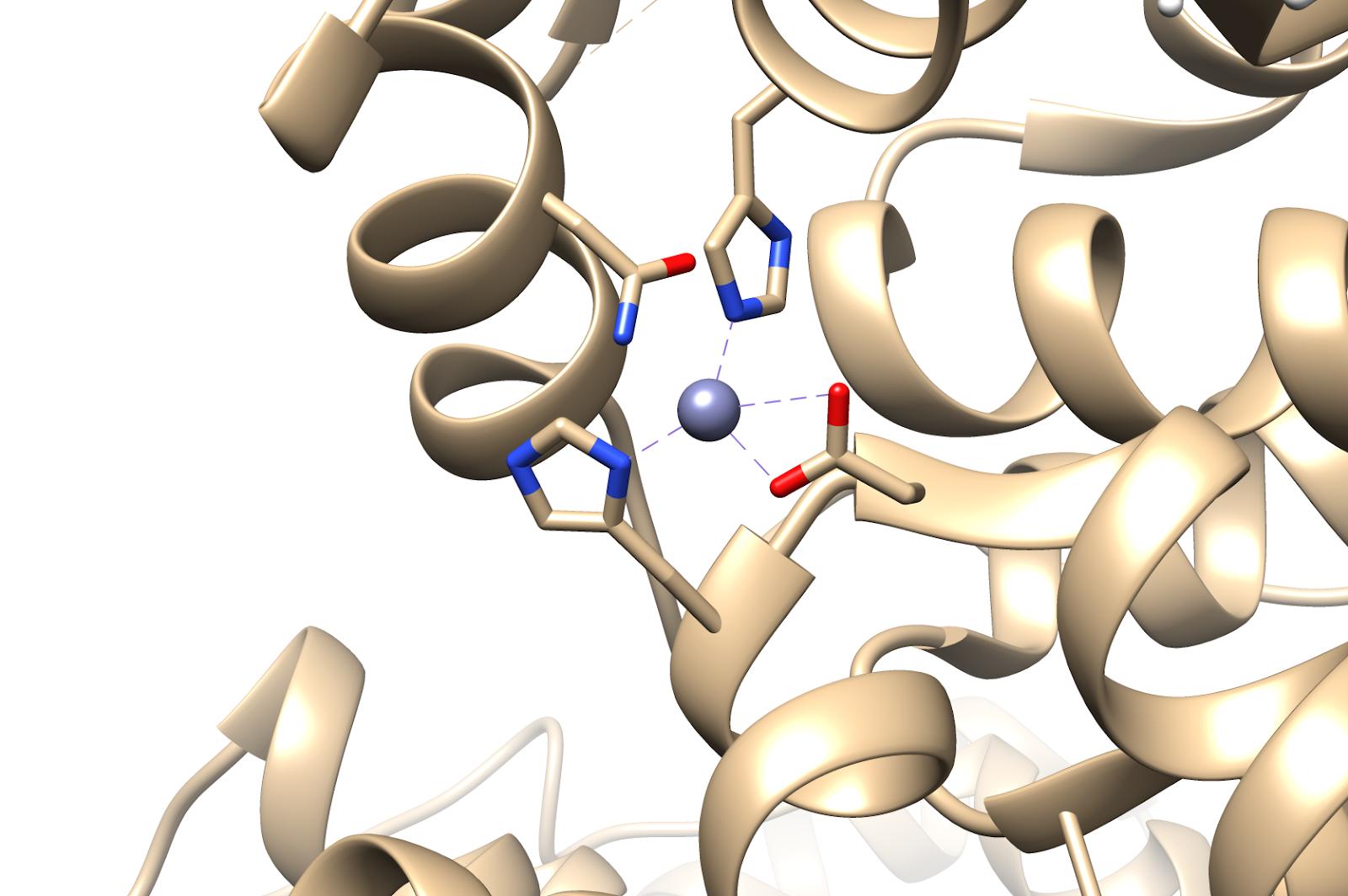 Zn(II)bindingsite.png