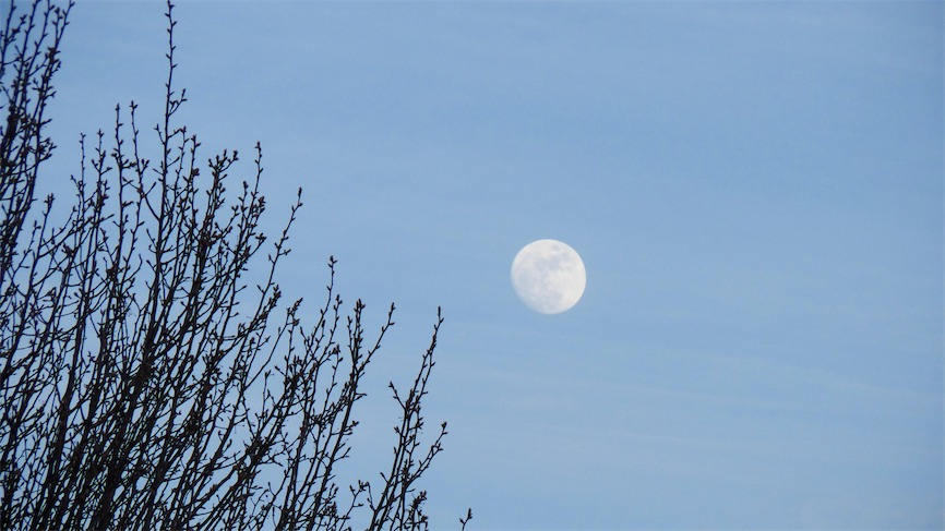 Bowl Moon 1.jpg