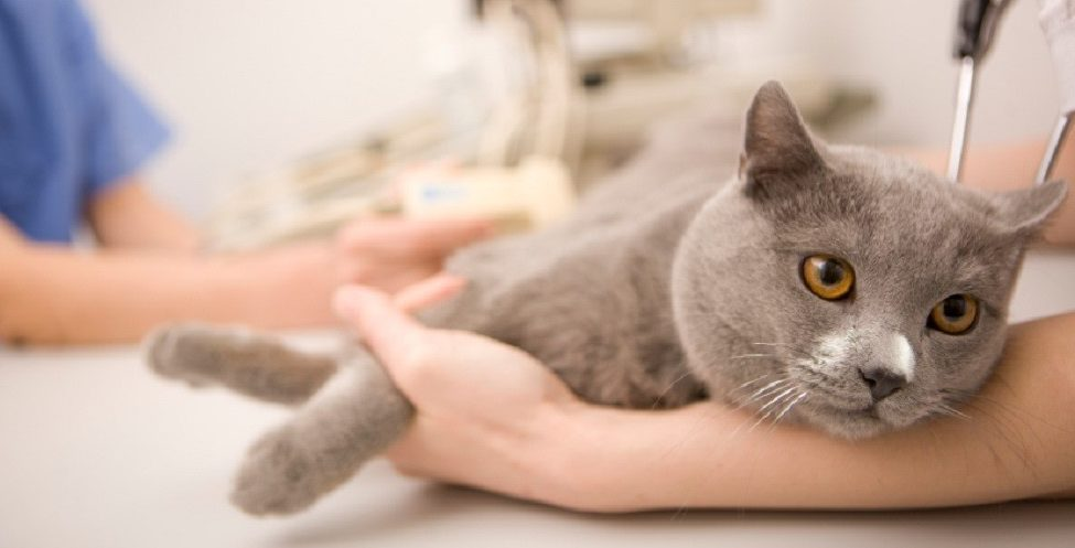 What is Veterinary Critical Care?