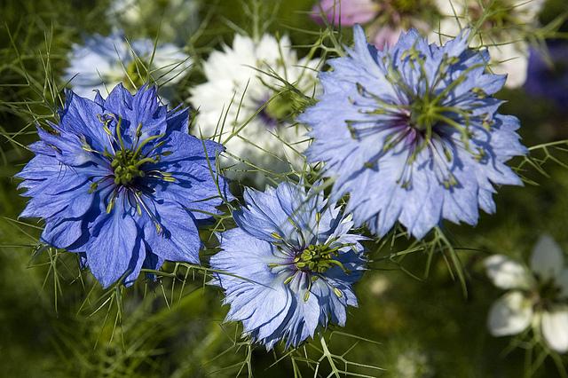 Chiêm ngưỡng hoa tình yêu làm siêu lòng giới trẻ - Ảnh 9