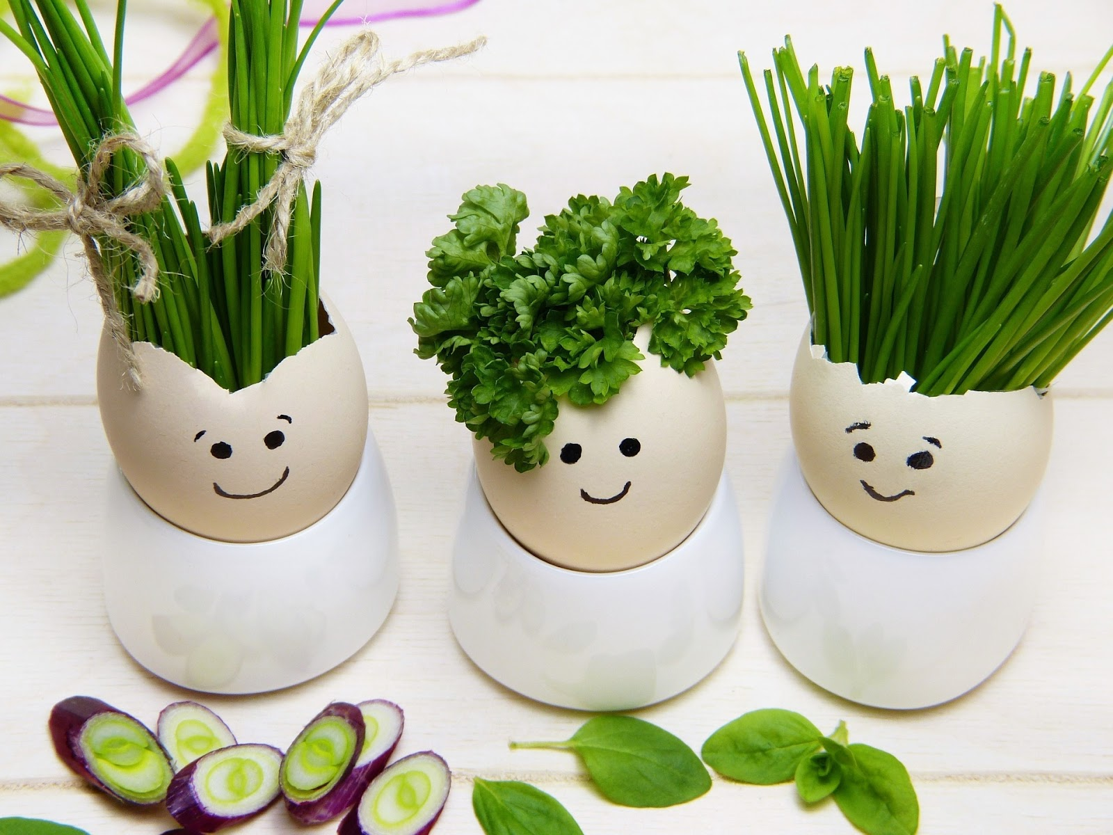 Herbs in eggshell planters