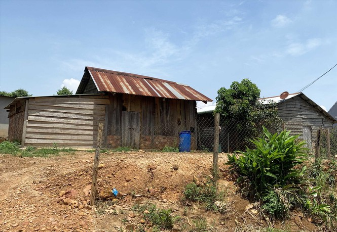 Lâm Đồng: 500 ha rừng biến mất, 'lọt' vào túi ai? - Ảnh 2