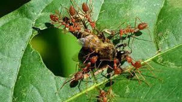 Diễn đàn rao vặt tổng hợp: Những loài côn trùng có ích bà con nông dân nên biết GLzaYGGkoIrtXwdblmtIEF9XhZMXSmsatYalOskU59g7h9dfrVdyV3GnAfkBgIbRQIqo2MItMu9s4hekaYpSYm64z_cKtOvYu4T7mQL7gRL-WEd-vEBMkClwfpBQFXIXc2rWAieR
