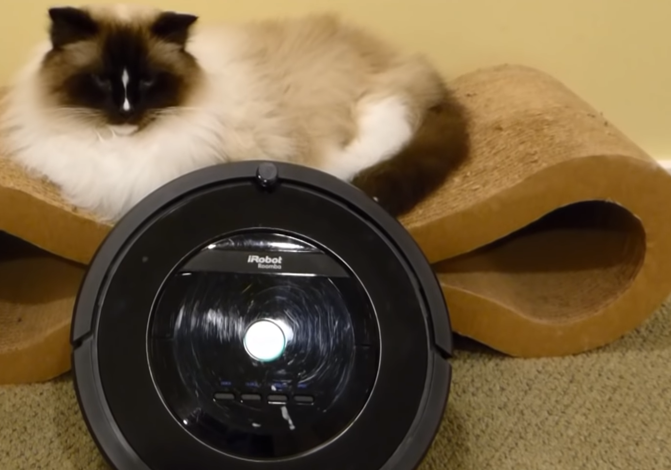 Astonishing Are Roomba Vacuums Any Good For Picking Up Animal Fur Download Free Architecture Designs Scobabritishbridgeorg