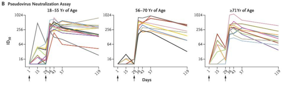 Charts describing the duration of neutralizing antibodies from the Moderna vaccine.