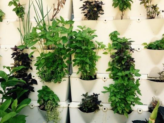 C:\Users\laptop-plc\Documents\Mariana\Freelance\Plantas\Imágenes\Plantas medicinales\laRepublica.es.jpg