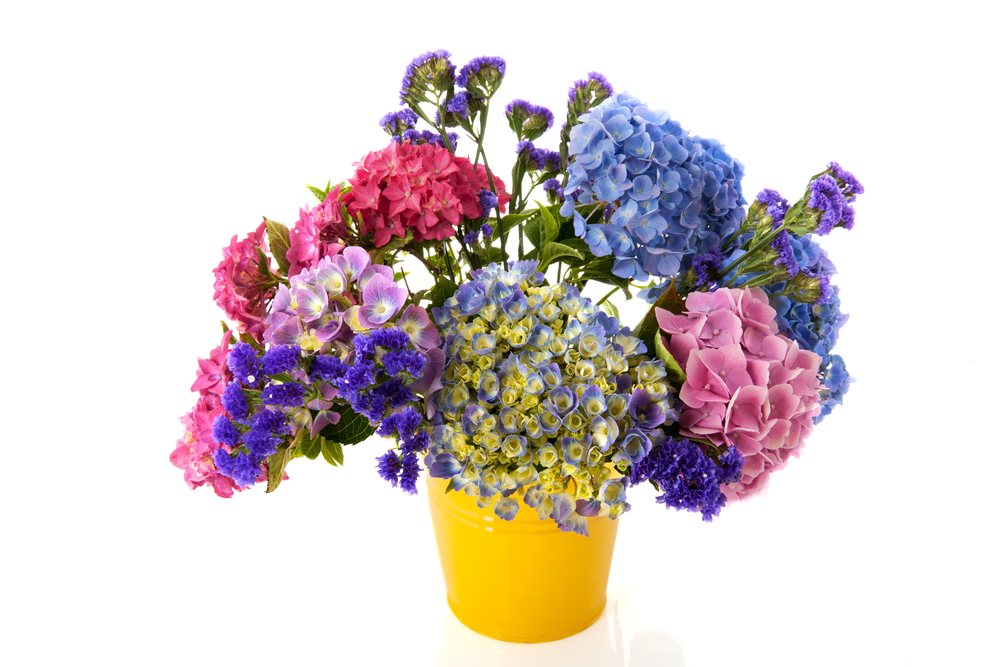 Colorful bouquet pink and blue Hydrangea in yellow bucket