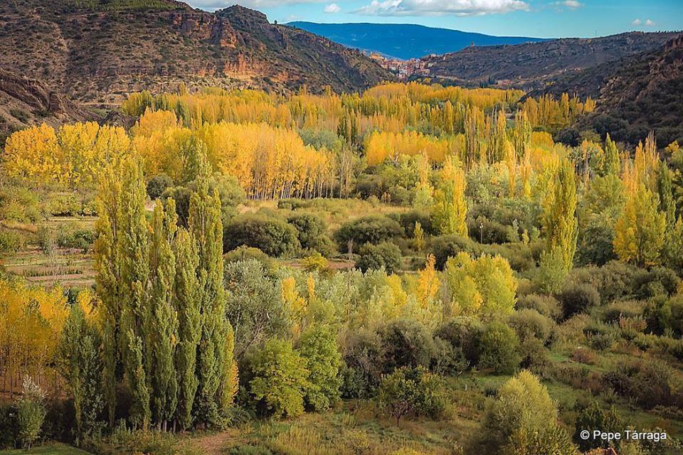 La imagen puede contener: árbol, planta, cielo, montaña, exterior y naturaleza
