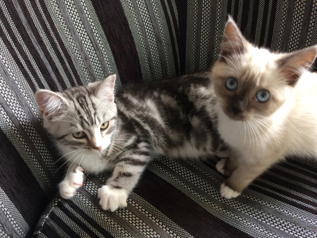 two kittens sitting on a sofa resting