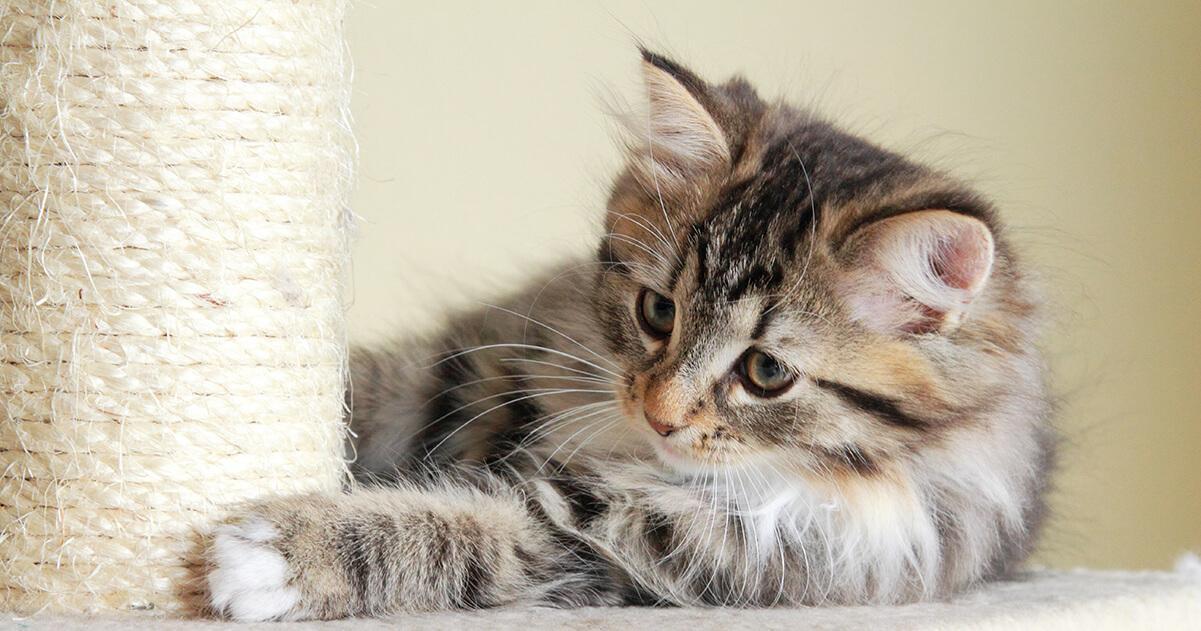 le griffoir de votre chat doit être idéalement placé