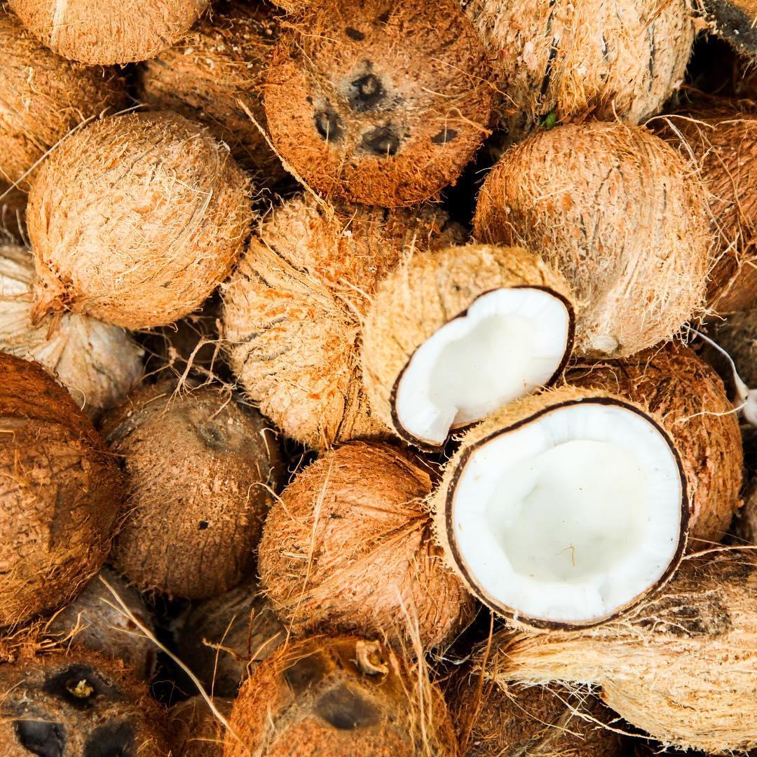 cách chữa hôi miệng dân gian Dùng dầu dừa
