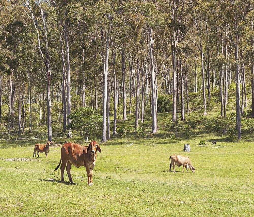 Integração lavoura-pecuária-floresta é uma das alternativas às queimadas (Fonte: Shutterstock)