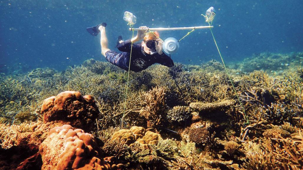 degraded coral reef