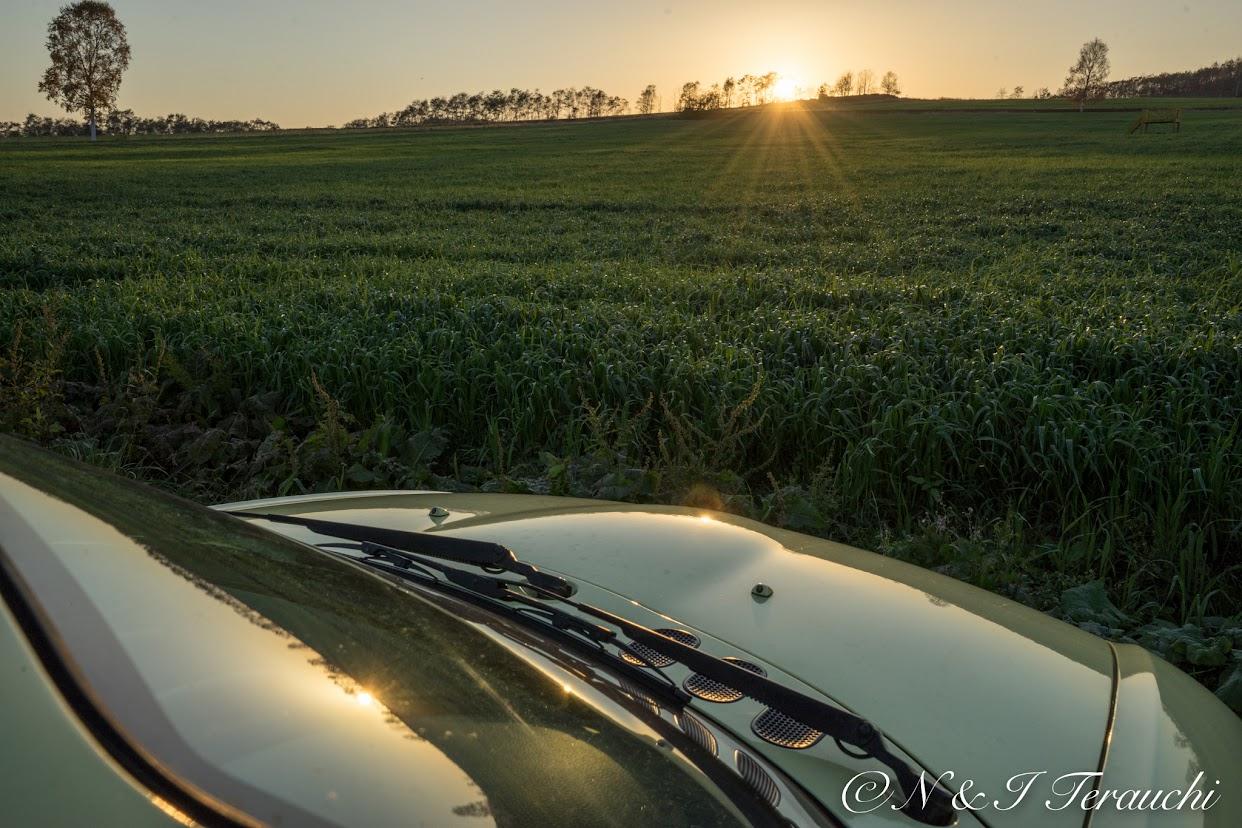 緑肥用燕麦が茂る北竜町ひまわりの里にて