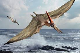 Image result for pterodactyl pictures