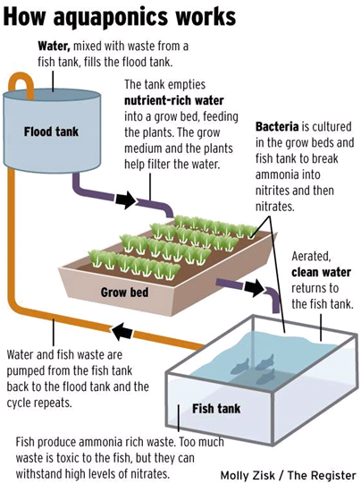 Media-Based-Aquaponics-System.png