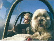 Photo of a Pilots & Paws transport