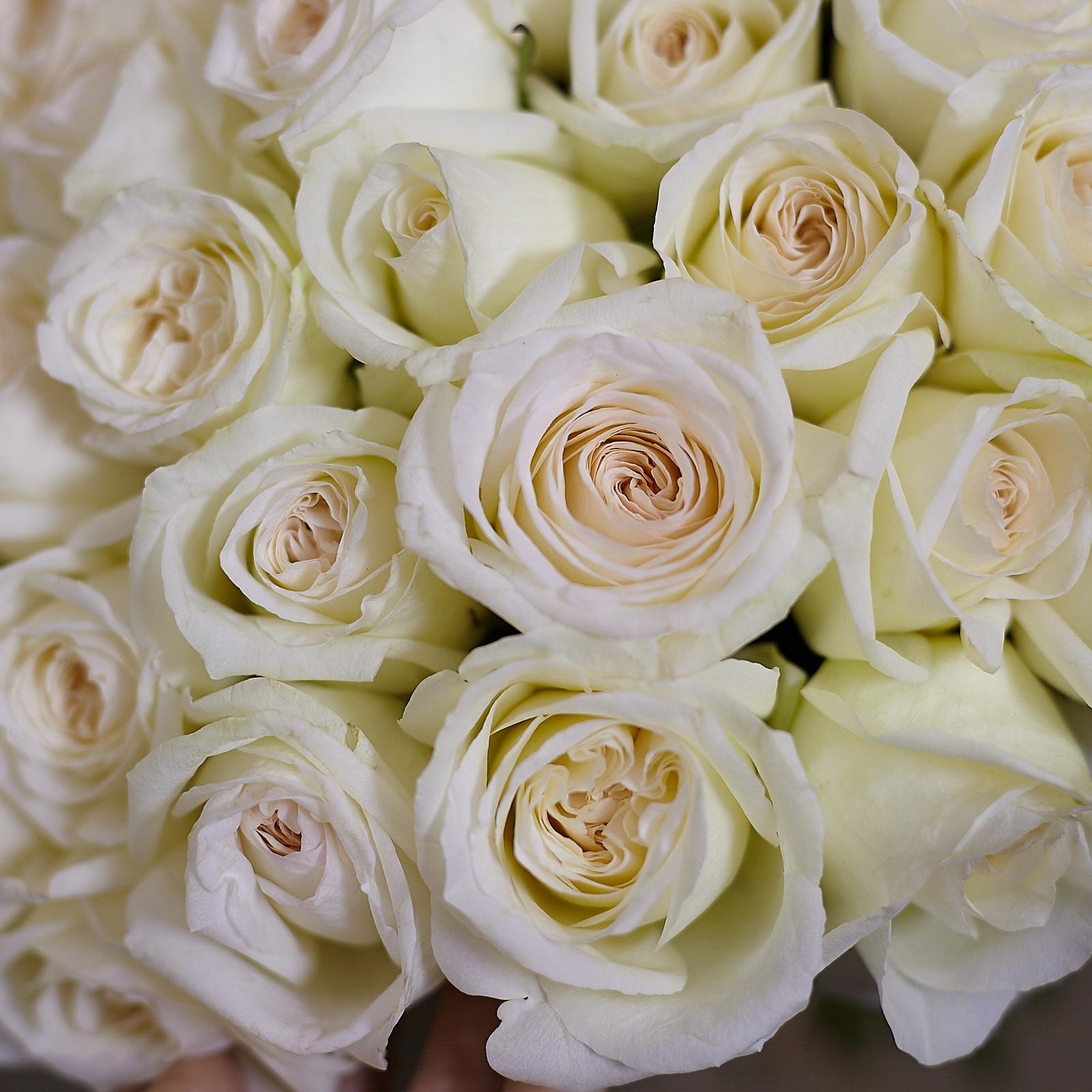 Что сделать с лепестками роз и засохшими розами