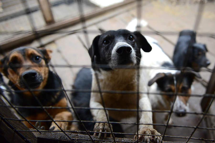 Собаки в клітці