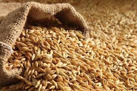 Image result for barley