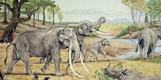 Αποτέλεσμα εικόνας για ελεφαντες στη μεγαλοπολης