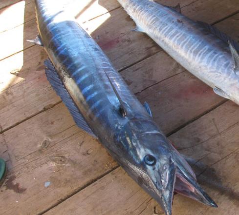 Cá thu một nắng là loại cá rất nhiều thành phần dinh dưỡng