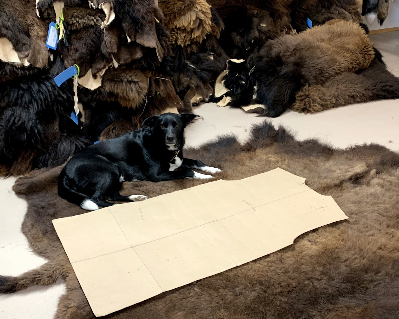 Billy the Kid (one of the shop puppies) lays on a buffalo rug next to a pattern cut out.