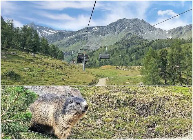 Marmot Path