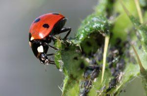 Plant health of plants, development of a disease