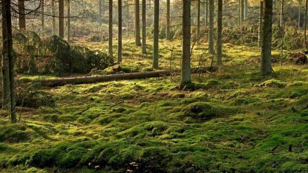 Кислоты, выделяемые в болотах, предохраняют тела от разложения в течение многих веков