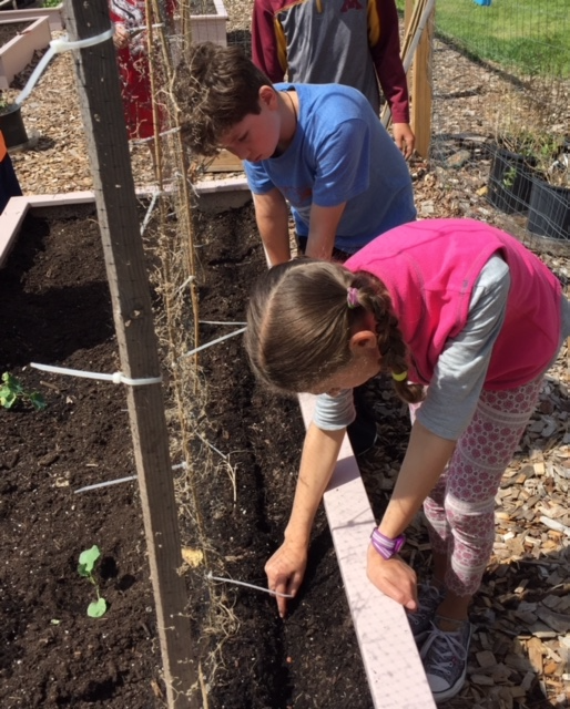 Students at Duluth Public Schools participate in their garden