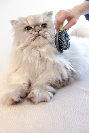 How to get scentsy wax out of cat hair