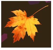 Картинки по запросу анимация осенний лист