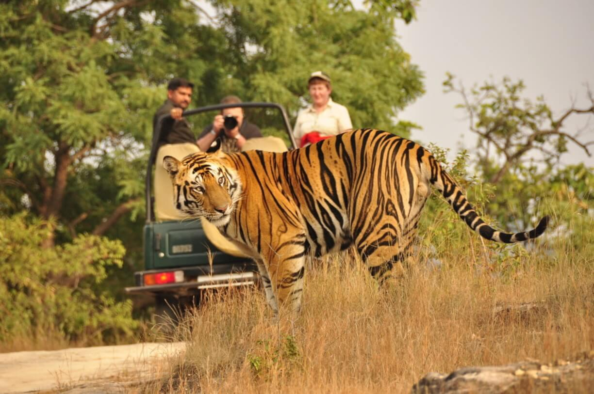 The Story Of Jim Corbett, Jim Corbett, Oldest National Park, James Edward, Jim, Kaladhungi