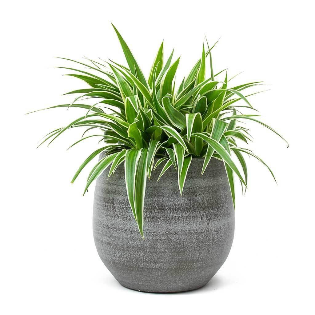 A vase of flowers on a plant  Description automatically generated