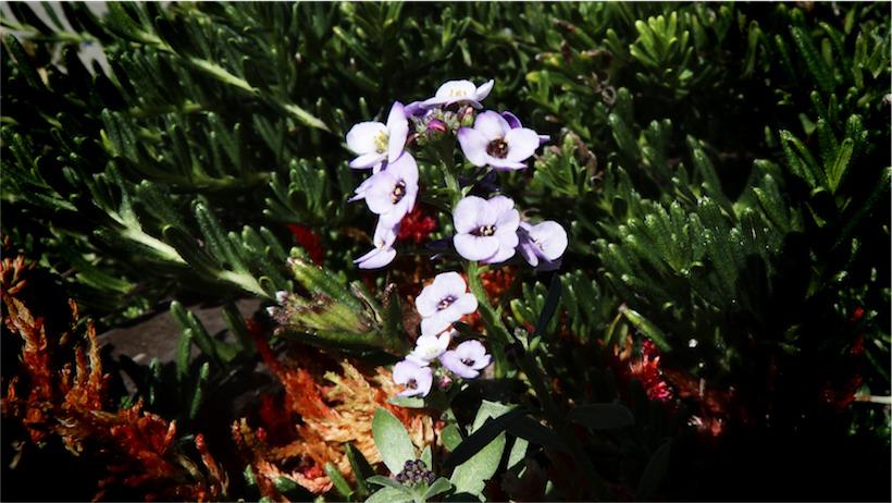 Tny Flowerland 1.jpg