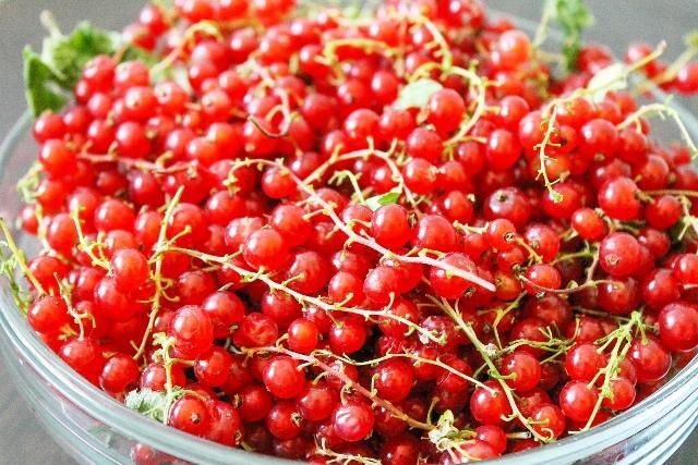 Красная смородина «Сахарная»