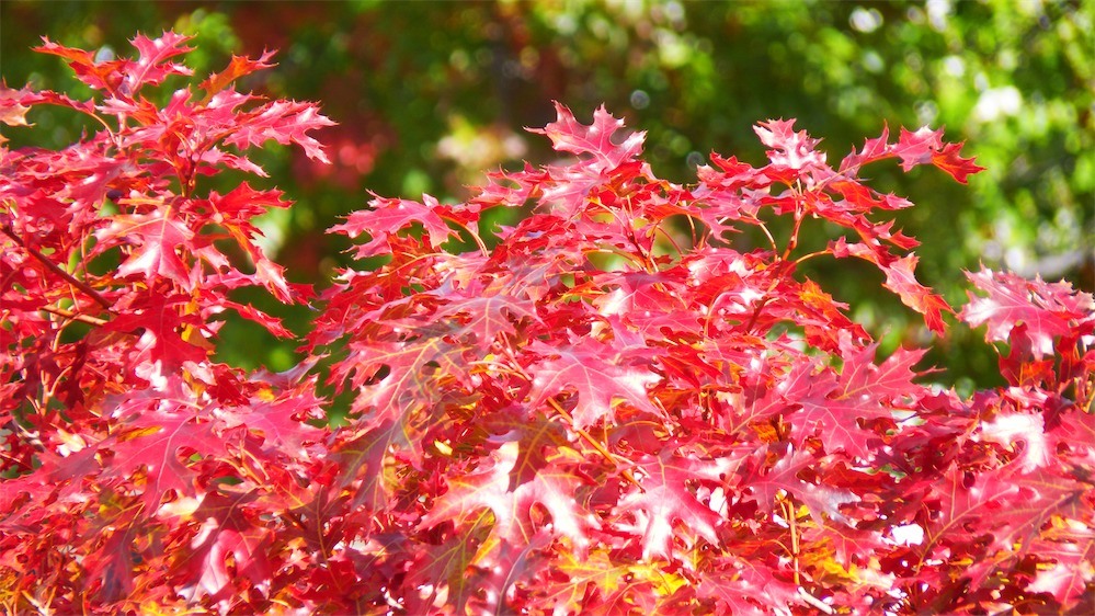 Lovely Fall Leaves.jpg
