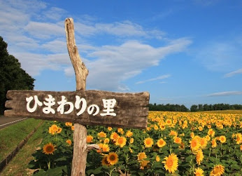 北竜町ひまわり観光協会