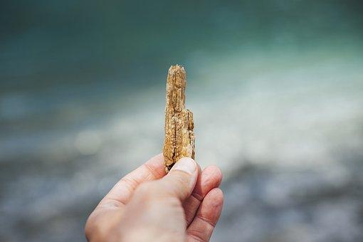 Drift Wood, Wood, Beach, Nature, Water