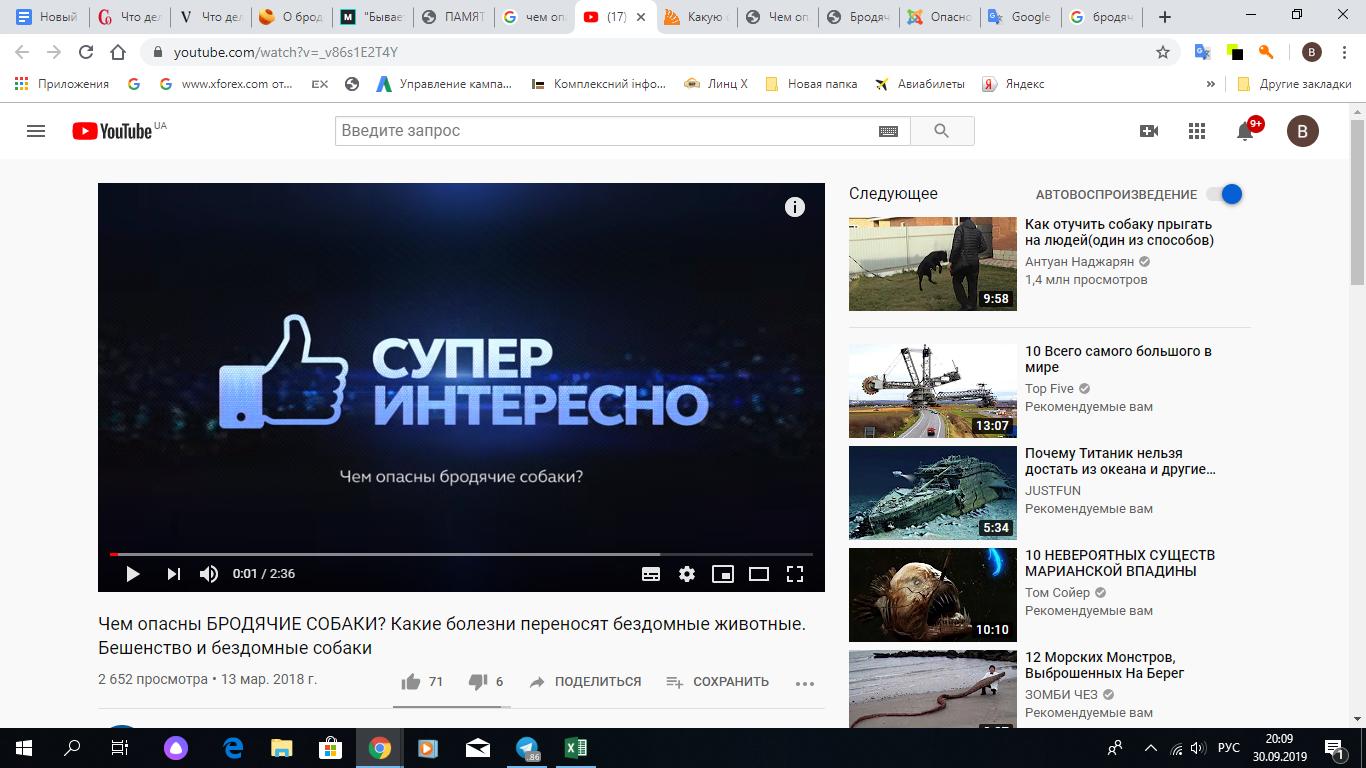 Скрін YouTube каналу, де розказано, чим небезпечні бродячі собаки