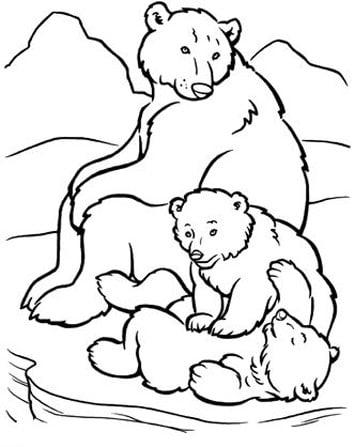 somdocents-ossos-polars-dibuix