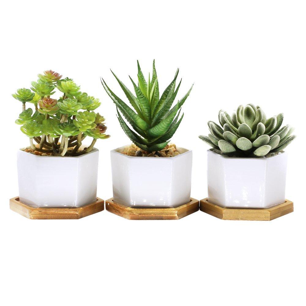 Three white hexagon succulent plant pots