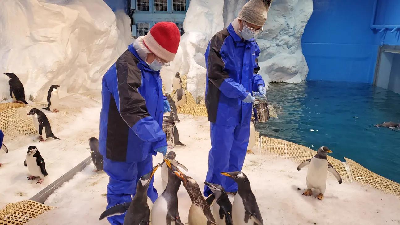 企鵝飼育照護體驗