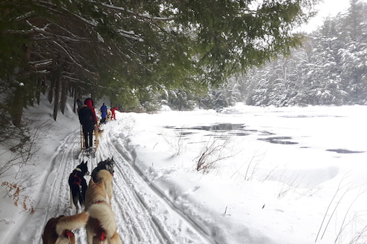 Come Dog Sledding in Haliburton Ontario Instead