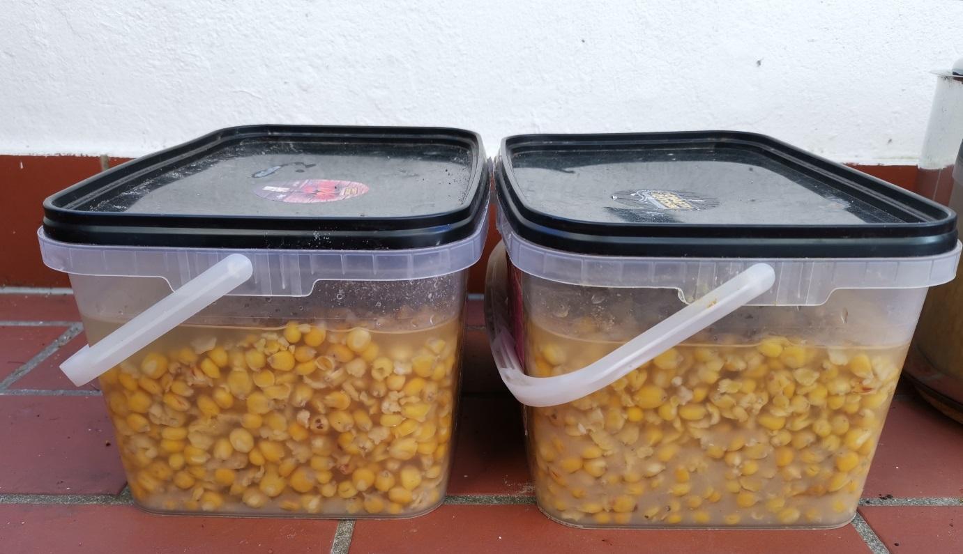 Unten rechts: Die milchartige Flüssigkeit ist beim Kochen entstanden – so kann der Mais bis zum Füttern und Angeln gelagert werden!