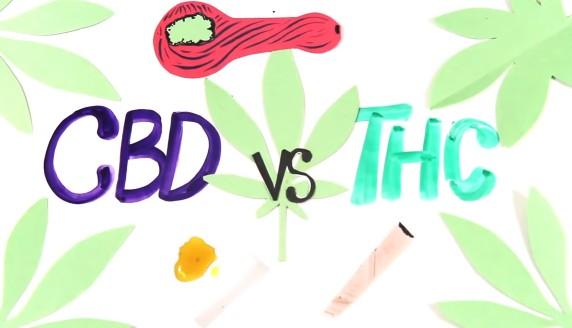 cbd vs thc logo