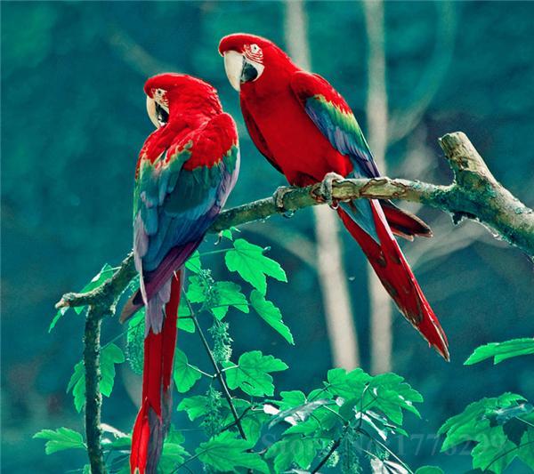 Số đề Việt giải đáp mọi thắc mắc về nằm mơ thấy chim chóc