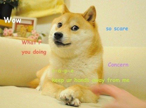 Пример мема «Doge»